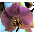 stlouis missouri us usa plant flower orchid macro petal light MOBOT 022908 2008