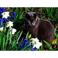 Cats spring flowers closeup happy easter