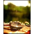 autumn drop reflection balis barbara