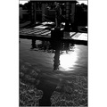 pool water shadow statue reflection surreal abstract transcendence bw