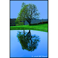 stlouis missouri us usa water reflection tree sky DreamFriday BH 041407 2008