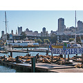 sanfrancisco harbor view sealions wharf pier39 sffph sfwaterfrontfph