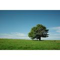 tree hill blue sky green grass nature countryside butser england hampshire