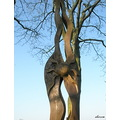 tree sculpture wood sun carving