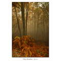 pelion autumn trees forest greece fog