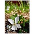 * wild is beautiful *