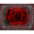 red rose digitalartclub