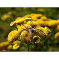 macro yellow spider macro