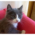 kitten cat baby rescue adoption pet animal kitty