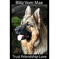 dog blitz german shepherd long hair jaro jaroslavas nation picture animal nature