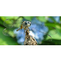 Nature dragonfly