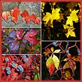 autumnfriday funfriday leaves collage