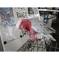 markets pink grey parrot scratch perth littleollie