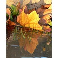 Leaf reflection (2)