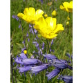 flower yellow blue
