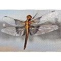 dragonfly on my screen