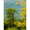 Fall colors elwha valley