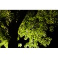 tree night light green