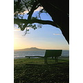 murraysbay murrays bay rangitoto sunrise bench landscape