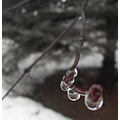week 5 macro droplets branches