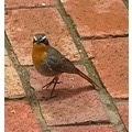 Bird on bricks