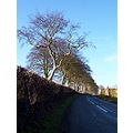 Urney Road Trees