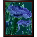 carnations flowers blue