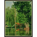 landscape nature polder flooding playground tree bush reflection