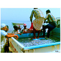 Fishermen in Dibba (U.A.E)