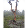 oldtree trees Australia