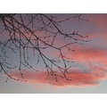 branches sky nature