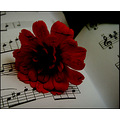 crack old photo dark flower red music chords book