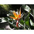 birdofparadise spring light sunlight shadow shadows kaiserfph