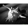 bw macro lighting shadow shell thailand poulets