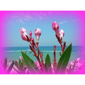 sea flowers pink nature blue