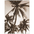 coconut tree philippines beach sepia tall trees