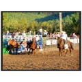 Rodeo series: 9/10 I came up a little short catching the cowboy transfering from the bucking hor...