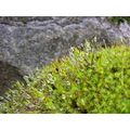 nature moss droplets peterpinhole
