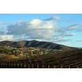 Valley Wine Vineyards California Pankey Wildspirit landscape