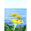 flower flowers neture beach outdoor Macro landscape
