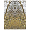 silverbirch birch tree bark branches abstract
