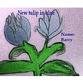 For Barry, the grower of a new tulip. LOL :)))