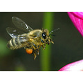 Bee insect animal nature wildlife bug