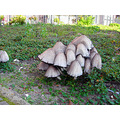 city nature mushrooms autumn zoetermeer holland