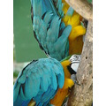 nature paints macaw