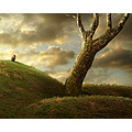 cat landscape photomontage tree surreal pino
