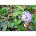 November Flower Power! =)
