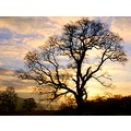 oak tree newbridge north devon