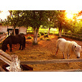 horse horses couple farm Archer