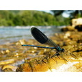 river insect light nature life